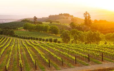Irrepressible Tokara launches 2018 Chardonnay